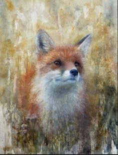 Heather's Water Works: The Shy, Illusive Fox