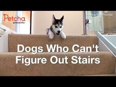 Adorable Puppy Goes Stair Surfing! hd - YouTube