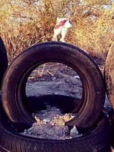 """Slab City:  someone took a pic of our tire fence with the little horsey on it!  cool!  The """"Black Picket Fence"""" at Slab-gri-la is getting famous!"""