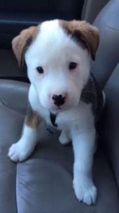 Top 10 Best Protective Dog Breeds