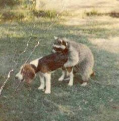 Jus A little Hound Dog Funny....lol...