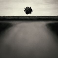 One Tree Squared Southern Gothic, Far Away, Black And White Photography, Paths, Art Photography, Images, In This Moment, Fine Art, World