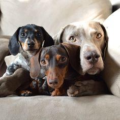 Hufflepuff•Slytherin•Hufflepuff .. Harlow and Sage family (Reese, Indiana, Harlow)