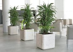 Office Plants, Interior Landscaping, Tropical Office Plants, Live & Artificial Plant Displays, Interior Landscape Franchising, Urban Planters