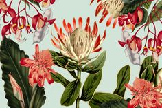Custom Designed Protea and Co Wall Art for your home and business. Contact us to create your custom wallpaper today! Custom Wallpaper, Designer Wallpaper, Protea Art, Wall Murals, Wall Art, Botanical Illustration, Wall Design, Hibiscus, Orchids