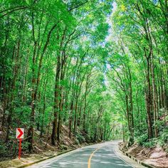 Bilar Man-Made Forest in Bohol Island, Philippines 🇵🇭😍♥️ Bohol, Palawan, Stuff To Do, Things To Do, Siargao Island, Whale Watching Tours, What To Do Today, Travel Brochure, Top Destinations