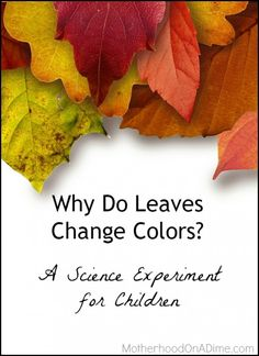 A science experiment to show kids why leaves change colors