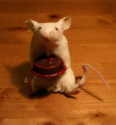 Taxidermy mouse with cake