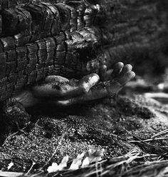 Photographic series, 120mm medium format film, Tokai forest, 2015