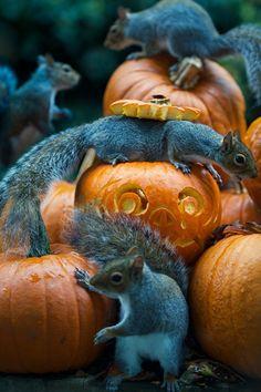 Squirrel Halloween Party!!