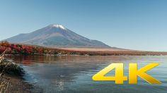 Autumn Leaves by Yamanakako - Yamanashi - 山中湖村 - 4K Ultra HD  ⛩ 🍂 🗻