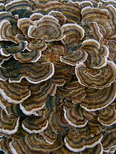 Daily Art Inspiration 10/09/09-Bracket Fungi by Lynn_EL/UnaOdd, via Flickr