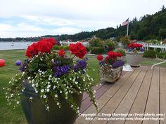 Patriotic colors on the 4th of July! Camano Island, Washington