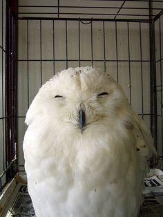 ^_^ love owls!