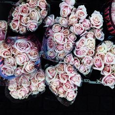 pink washed roses.