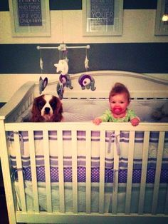 Caption This! Dog and baby serving crib time.        My Caption:  What's HE doing in my bed?