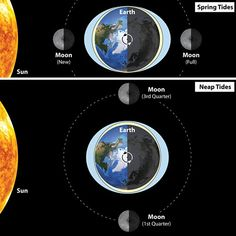 Spring tides and neap tides of the Earth's oceans