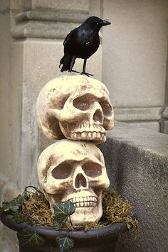 Halloween Decorating ideas... these would look nice on the sides of the porch steps. Maybe have the kind with open eye sockets & add a flameless tea lights inside.