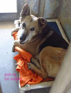 A3939237 My name is Julius. I am a very friendly 9 yr old female black/brown German Shepherd. My owner left me here on August 25. available now. Baldwin Park shelter Open for Adoptions 7 days a Week 4275 Elton Street, Baldwin Park, California 91706 Phone 626 430 2378 https://www.facebook.com/photo.php?fbid=833673393311166&set=a.705235432821630&type=3&theater