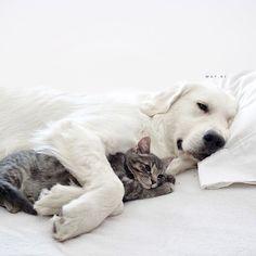 """Die Hunde Watson und Kiko sind die besten Freunde der Katze Harry """"Wie Hund und Katze"""" ist ein Ausspruch, der die Feindschaft der beiden Tierarten bestens zum Ausdruck bringt. Es ist aber nicht immer so, dass Hunde..."""