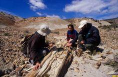 Desde Bahía Bustamante se puede visitar un bosque petrificado de millones de años de antigüedad.