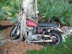 motorcycle eating tree