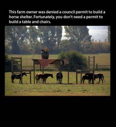 funny photos, big table for horses