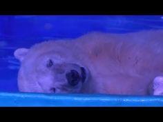 Help Polar Bears at