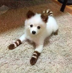 Oooh, the socks on the small legs...