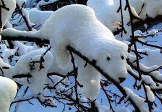 Schnee-Eisbär. Mehr zum Tag des Eisbären: http://www.kleiner-kalender.de/event/tag-des-eisbaeren/18752.html #Eisbaeren #Schnee #Winter