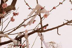 miyajima | Flickr - Photo Sharing!