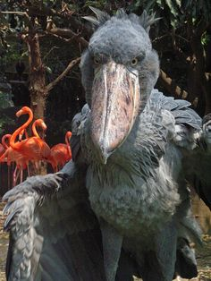 The Shoebill Stork can smell fear, so making bathroom in your pants sure isn't going to help you.