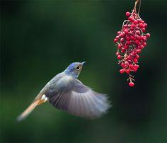 57 Fabulous Bird Images - Digital Photography School