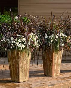 The two tones of our 'Cinnamon and Sugar' will be easy to enjoy from spring through fall. Large containers such as these, in multiples, really makes a statement.