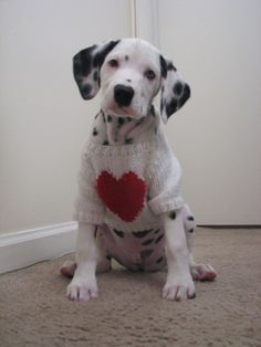Valentine's Day Dog | The Perfect Valentine's Gifts for Your Boyfriend | The MAGIX Magazine