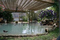 Duck Aviary Love the lattice roof. I dream of this duck pond. Raising Ducks, Raising Chickens, Duck Enclosure, Duck Pens, Duck Coop, Pet Ducks, Duck House, Homestead Farm, Future Farms