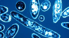 Legionnaires' Disease Outbreak Deaths Up to 4 - http://gazettereview.com/2015/08/legionnaires-disease-outbreak-deaths-up-to-4/