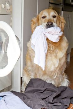 Household Cleaners That Are NOT Dog Safe - most cleaners are toxic to pets -- and people. We point you to some alternatives.