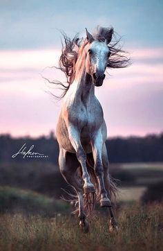 equus equine ♘ the horse le cheval by Hafner Photography Cute Horses, Horse Love, Horse Girl, All The Pretty Horses, Beautiful Horses, Animals Beautiful, Horse Photos, Horse Pictures, Horse Wallpaper