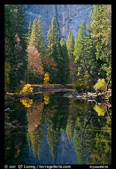 Merced River, trees and reflections at the base of Cathedral Rocks. Yosemite National Park by QT Luong