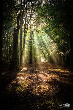 Sparkling light from the trees by Wilco van der Laan Fotografie on 500px
