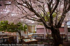 Ike's Quarter Cafe, outdoor patio, #NevadaCity, http://outsideinn.com/blog/ikes-quarter-cafe-nevada-city.htm/