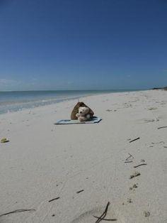 Fozzie am Bahia Honda Beach