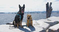Pet friendly travel destinations