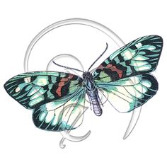 Freebie digital download Butterfly Clip Art Papillons 25 (free download)