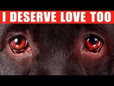 9 Ways to Tell Your Dog You Love Them - YouTube
