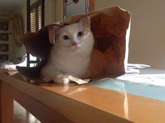 Amo i sacchetti!