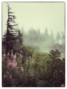 Heather Meadows and Picture Lake on a misty summer day.