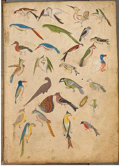 Lovely old illuminated manuscript bird illustration Art And Illustration, Illustrations, Bird Sketch, Medieval Art, Renaissance Art, Art Graphique, Illuminated Manuscript, Bird Art, Bird Feathers