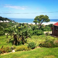 The Wild Coast! My happy place! My Happy Place, South Africa, Vineyard, Cape, Tours, Spaces, Amazing, Plants, Outdoor